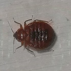 How To Treat Bed Bugs While Traveling