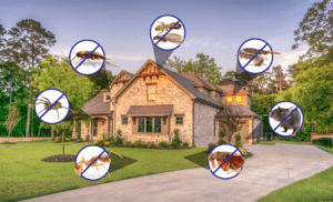pest control package pricing